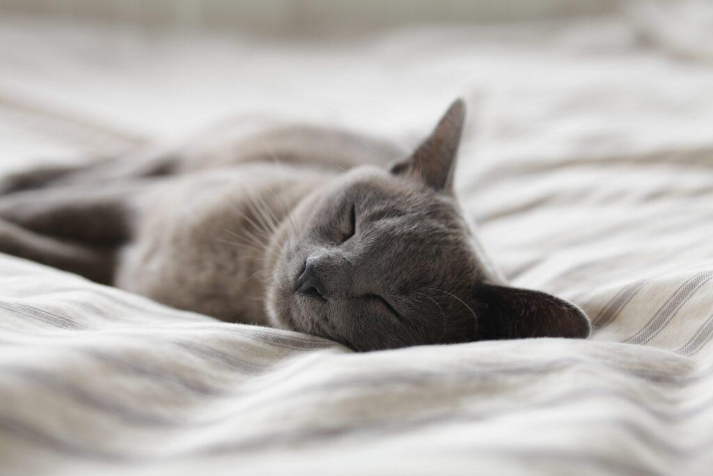 Mer energi med bedre søvn